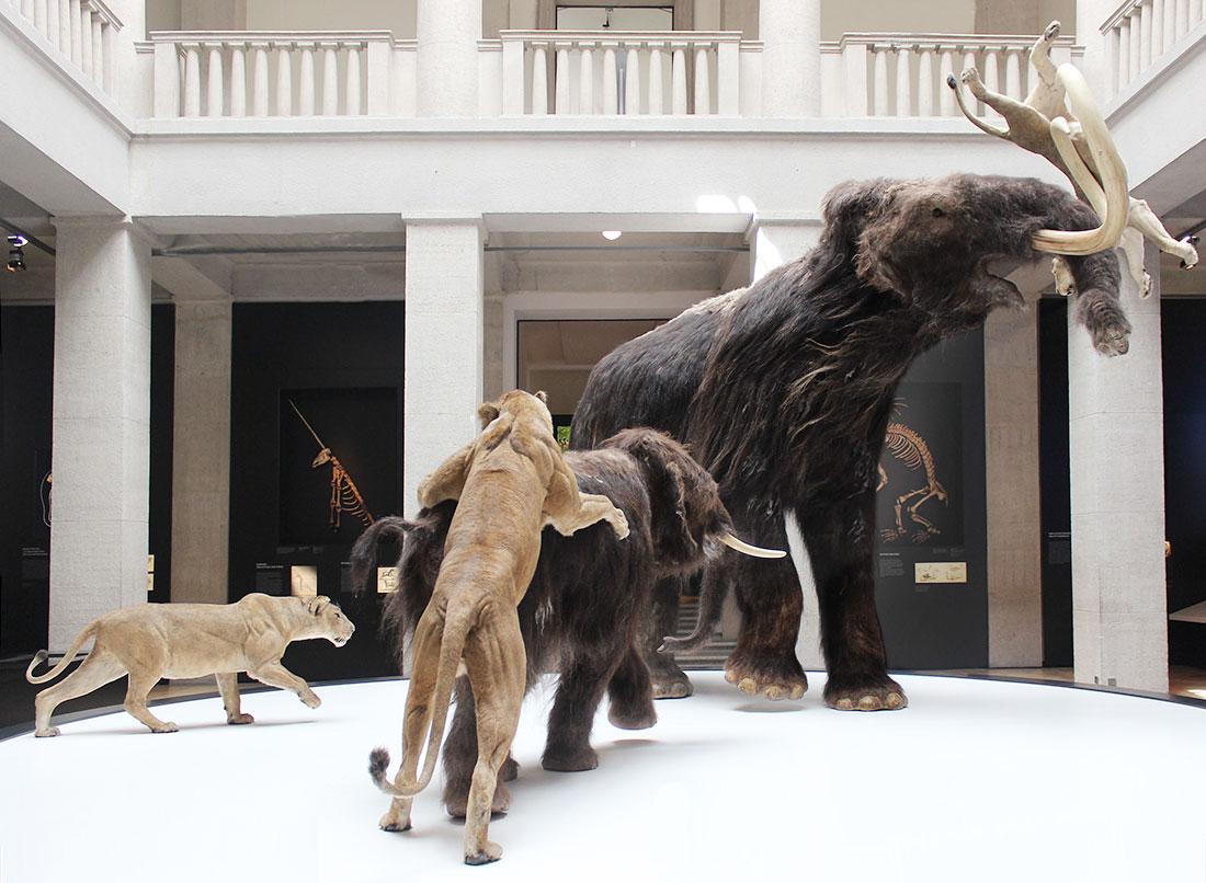 Fertigung eines Mammuts für eine Ausstellung / Tierpräparator